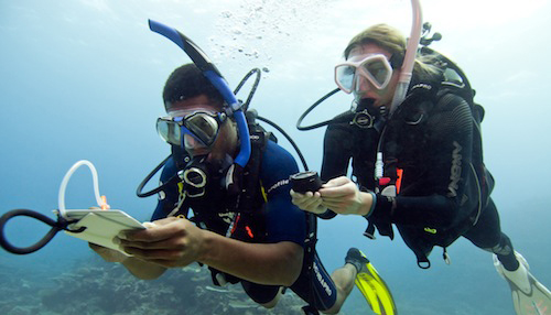 RDS button duikopleiding Padi Open Water