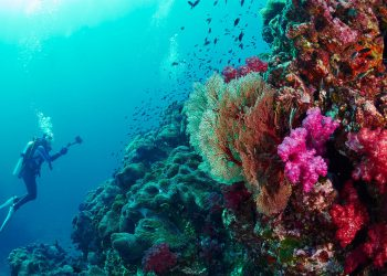 diving-at-the-similan-islands
